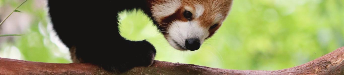 de-leukste-dierentuinen