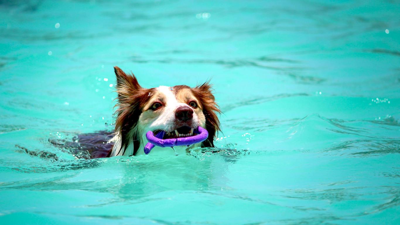 op-vakantie-met-je-hond